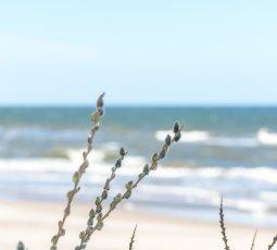 Wiosna nad morzem
