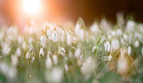 Wiosenna odwilż cenowa