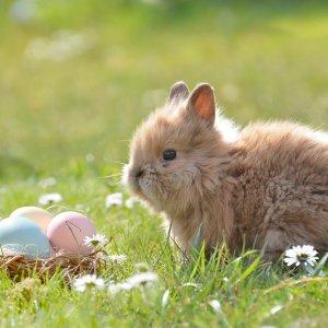 Rodzinna Wielkanoc w Beskidach