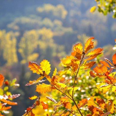 Złota jesień w doskonałej cenie!