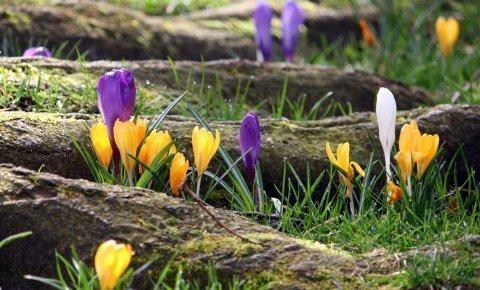 Słoneczna Wiosna w promocyjnym pakiecie min. 3 dni