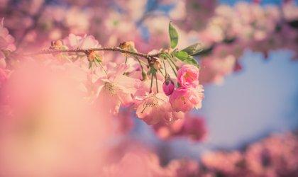 Mierzęcin wiosną