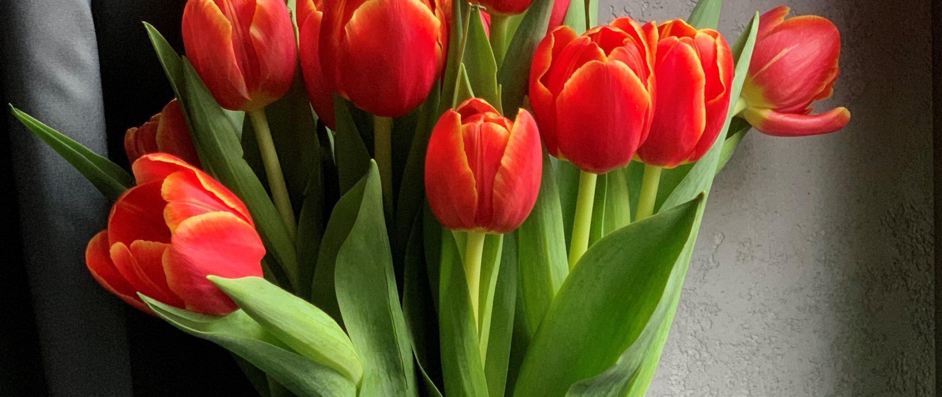Wiosenne Orzeźwienie