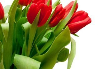 Kwiaty do pokoju
