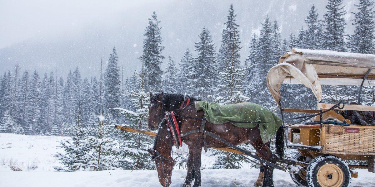 Winterzauber  - gültig von Dezember bis Mitte März nach Verfügbarkeit