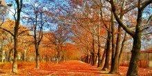 Złota Jesień w Sopocie