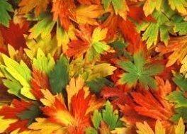 Jesienny wyjazd w Karkonosze