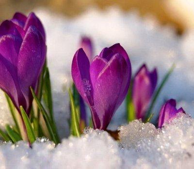 W poszukiwaniu wiosny...